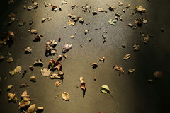 Background of fallen leaves on the asphalt Royalty Free Stock Images
