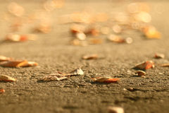 Background of fallen leaves on the asphalt Royalty Free Stock Photos