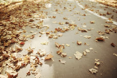 Background of fallen leaves Stock Photos