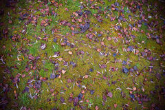 Background Fallen Leaves on the Grass Stock Image