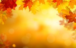Background of falling autumn leaves royalty free stock images