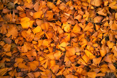 Background of falling leaves Stock Image