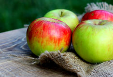 Background farm organic apples on coarse cloth Stock Photo