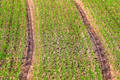 Background of the farmer field. Royalty Free Stock Photo