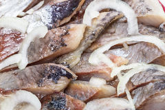 Background of fatty herring Stock Photography