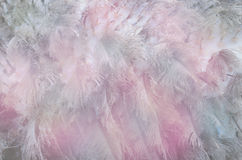Background of feather with Soft Focus Color Filte Royalty Free Stock Photo
