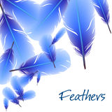 Background with feathers Royalty Free Stock Photography