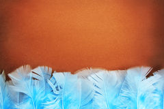 Background from feathers. Decorative brown background with blue feathers Stock Photos