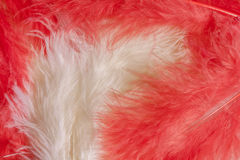 Background with feathers Stock Image