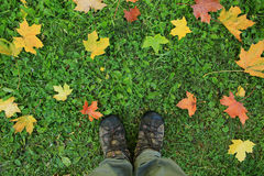 Background with feet in shoes on yellow leaves Royalty Free Stock Photography