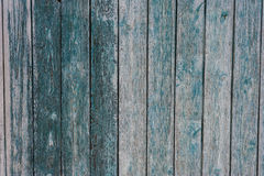 The background is a fence made of planks texture vintage Stock Photo