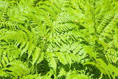 Background of fern Stock Photos
