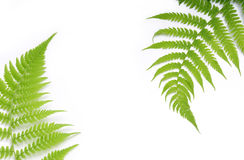 Background with fern stock photography