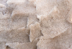 Background of fiber on shorn alpaca back Stock Photo