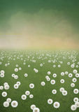 Background field of dandelions. Summer background with dandelion flowers, green grass and dawn. Computer graphics Stock Images