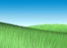 Background field grass. Field green grass sky background Stock Photography