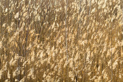 Background from a field with grass thickets Stock Photo