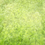 Background with the field of strawberry leaves Stock Images