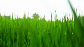 Background Fields green. Fields of green, leave, Nature /Landscapes Royalty Free Stock Photos