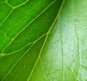 background file leaf xxl Ζωή και φύση Στοκ φωτογραφία με δικαίωμα ελεύθερης χρήσης