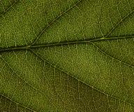 background file leaf xxl Стоковое Изображение