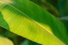 background file leaf xxl стоковое изображение rf