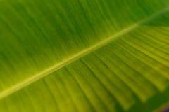 background file leaf xxl Στοκ Εικόνες