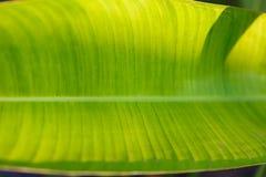 background file leaf xxl стоковые изображения rf