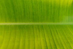 background file leaf xxl стоковое фото
