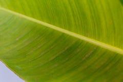 background file leaf xxl Στοκ φωτογραφίες με δικαίωμα ελεύθερης χρήσης