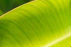 background file leaf xxl Στοκ Εικόνα