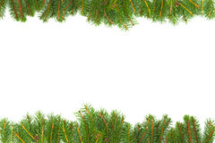 Background with fir Royalty Free Stock Photo