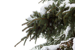 Background Fir Branch With Pine Cone And Snow Flakes. Christmas Holidays Royalty Free Stock Photography
