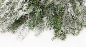 Background a fir-tree Stock Image