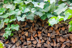 Background of firewood stack with grape leaves Stock Photography