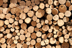Background of firewood stacked to dry Stock Images