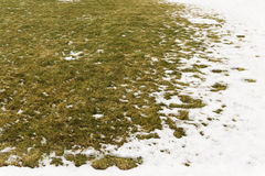 Background from first snow on green grass. Winter is coming Stock Photography