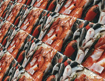 Background - fish in red, white and black Stock Photography