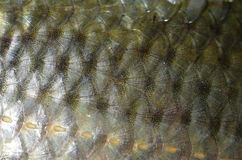 Background fish skin Stock Photography