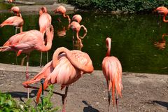 Background flamingos. Background of fabric or different kinds of wood stock photo