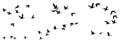 Flight of birds. Royalty Free Stock Photo