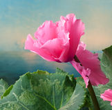 Background with flower Stock Image