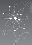 Background flower Royalty Free Stock Images