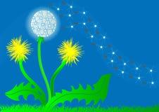 Background flower dandelion Stock Photos