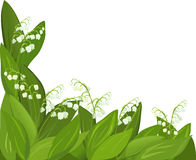 Background flower lily of the valley. Vector illustration Stock Image