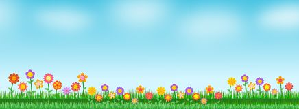 Background flower in the meadow Royalty Free Stock Images