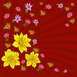 Background, flower narcissus. Vector background, pattern with flowers narcissuses and lines Royalty Free Stock Photos