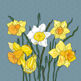 Background with flower narcissus. Floral background with Narcissus.Greeting card royalty free illustration