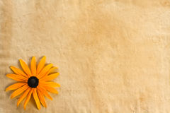 Background with flower on old paper Royalty Free Stock Photography