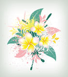 Background with flower plumeria Stock Images